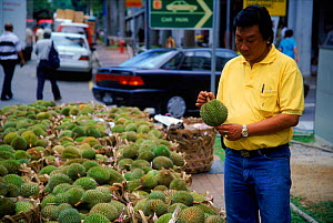 Man buying durian fruit {Durio zibethinus} Singapore  -  Bengt Lundberg