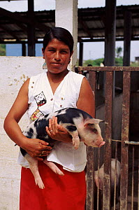 Genetic stock improvement of pigs, Pro Pueblo Foundation, Ecuador  -  Pete Oxford