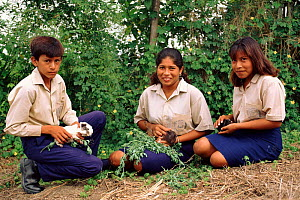 Guinea pig rearing project, Pro Pueblo Foundation, Ecuador  -  Pete Oxford