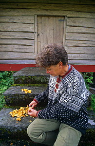 Woman cleaning Chanterelle mushrooms (Cantharellus cibarius) for eating. Norway, Scandinavia, Europe  -  Niall Benvie