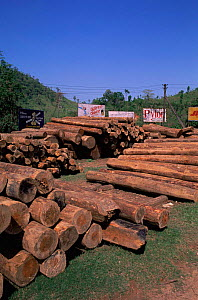 Felled hardwood timber stacked up, taken from local rainforest, Arunachal Pradesh, North East India  -  Vivek Menon