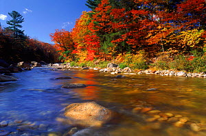 Autumn colours at Saco valley, White mountains, New Hampshire, USA - David Noton