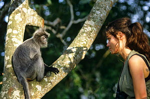 "Charlotte Uhlenbroek presenter of BBC television series ""Cousins"", with Silvered leaf monkey, on location in Thailand, 1999  -  Bernard Walton"