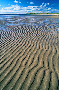 Sandy beach with sand ripples at low tide. Seahouses, Northumberland, UK  -  Bernard Castelein