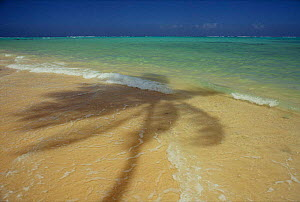 Palm tree shadow on beach nd sea shore, Tobago, Caribbean.  -  Staffan Widstrand