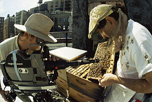 Cameraman Rod Clarke filming bee-keeper on top of apartment building, Manhattan, New York, for BBC Natural World programme: Metropolis. 1997  -  Rupert Barrington