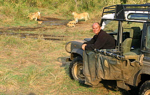 Simon King with African lion pride and cubs (Panthera leo) during Big Cat Diary series filming, Masai Mara NR, Kenya  -  Angela Scott