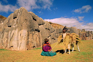 Indian with Llama carrying hay {Lama glama} Cusco, Peru Sacsayhuaman ruins - Pete Oxford