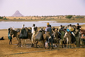 Collecting water from lake in leather water skins, using donkeys to carry back to villages, Mellit, Darfur, Sudan 1986  -  Sarah Byatt