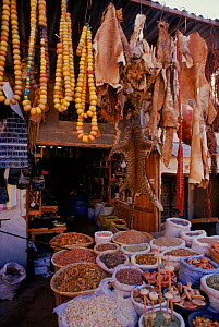 Animal products and skins for sale as medicine. Marakesh Morocco, Africa - GRAHAM HATHERLEY