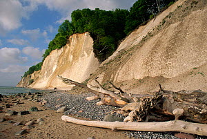 Chalk cliffs, Rugen Island, Germany  -  Christoph Becker
