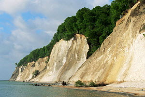 Chalk cliffs along coast of Rugen Island, Germany  -  Christoph Becker