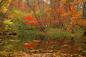 Pool in autumn woodlands Ussuriland, Primorsky, Far East Russia  -  Yuri Shibnev