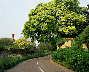Road Winding through Oxfordshire village, UK.  -  Neil Bromhall