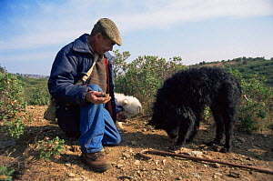 Man out searching for truffles with dogs, Gard, France  -  Jean E. Roche
