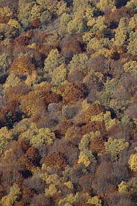 Aerial view of deciduous autumn woodland, Puy de Dome, France - Martin Dohrn