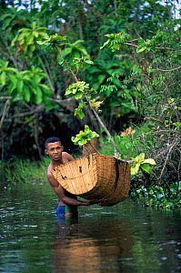 Fisherman with traditional shrimp trap in river, Maroantsetra, Madagascar  -  Pete Oxford