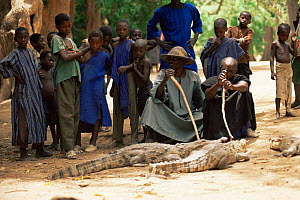 Dogon crocodile keeper, Mali, West Africa.  The crocodile is the first symbol of Dogon, they have a ancestry pact with crocodiles and protect them, even consulting them during important village decisi...  -  Grant McDowell