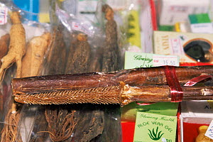 Tiger penis for sale in Chinese medicine shop Penang, Malaysia  -  Pete Oxford