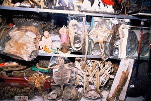 Sea horses, lizards and other wildlife for sale in Chinese medicine shop Penang, Malaysia  -  Pete Oxford