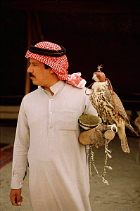 Arab falconer with his hooded bird, Saudi Arabia 1985  -  Richard Porter
