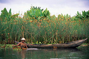 Man in river catching shrimp, next to dugout canoe, Maroantsetra, Madagascar.  -  Pete Oxford