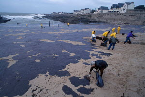 Clearing oil and dead seabirds from beach after oil spill from tanker Erika disaster.Batz-sur-mer. Brittany, France. Dec 1999. - VINCENT MUNIER