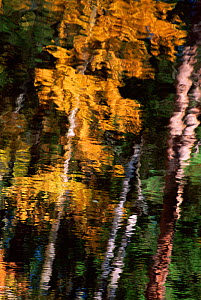 Autumn trees reflected in water, USA - Larry Michael