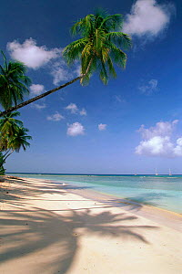 Pigeon Point beach, Tobago  -  David Noton