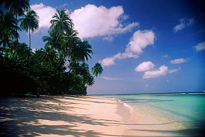 Pigeon Point, Tobago, Caribbean - Sky, sea, sand and palm trees  -  Juliet Yates