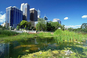 Wasteland in centre of Perth, Western Australia  -  Neil Lucas