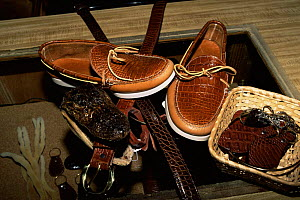 Shoes, belts and purses  made from American alligator skin / leather,  Florida, USA  -  Lynn M Stone