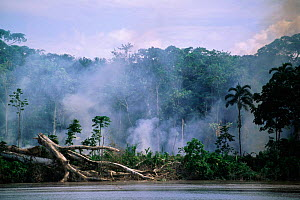 Deforestation - smoke from fires in Amazon rainforest along river bank, Ecuador, South America  -  Pete Oxford
