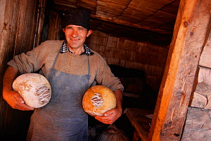 Shepherd with cheeses, Carpathian mtns, Transylvania, Romania - Staffan Widstrand