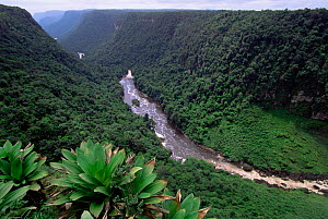 Valley down stream of Kaieteur Falls, Guyana, South America. Tropical rainforest  -  Pete Oxford