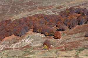Soil erosion on hillsides due to deforestation and overgrazing, Nympheon Mountains, Northern Greece  -  Constantinos Petrinos