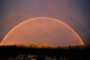 Double rainbow over taiga habitat, Northern Quebec, Canada  -  Jose Schell