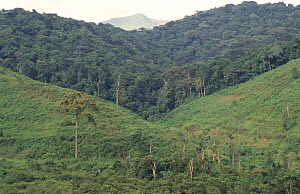 Boundary between cleared land and tropical forest, Bwindi Forest NP, Uganda - Claudio Velasquez