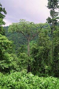 Rainforest during Monsoon season, near Periyar Wildlife Sanctuary, Western Ghats, Kerala, India - Ian Lockwood