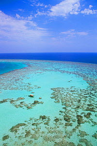 Aerial view of coral reef landscape at Sanganeb, Sudan, Red Sea  -  Georgette Douwma