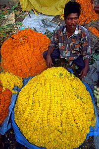 Flower market Hoogli river, Calcutta West Bengal, India - - Pete Oxford