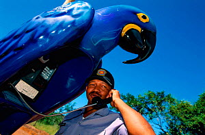Police officer in macaw shaped telephone booth Pantanal, Brazil  -  Staffan Widstrand