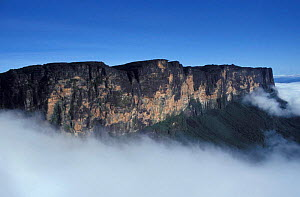 Mount Roraima - flat topped mountain / tepui - summit visible above mist, Venuezela  -  NEIL NIGHTINGALE