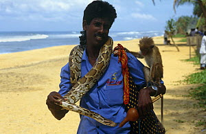 Tourist attraction, man with python and monkey on beach, Vialutra region, Sri Lanka - Paul Johnson