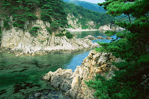 Coastal habitat of Sea of Japan with pine tree forest {Pinus funebris} Primorsk, Ussuriland, Russia  -  Konstantin Mikhailov