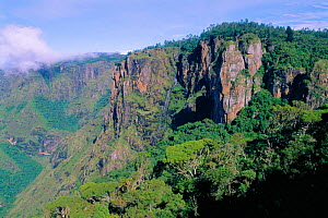Shola forest at Pillar Rocks shunted montane tropical rainforest, Western Ghats, Palni Hills, Tamil Nadu India  -  Ian Lockwood