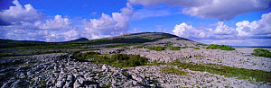 Mullach mor limestone pavement Burren NP, Co Clare, Ireland  -  DAVID TIPLING