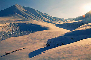 Dog sledge crossing snowy landscape with ecotourists Svalbard, Spitzbergen, Norway  -  Staffan Widstrand