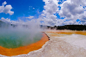 Champagne pool, carbon dioxide bubbles in mineral hot spring, Taupo volcanic zone, Rotorua, New Zealand  -  Steven David Miller