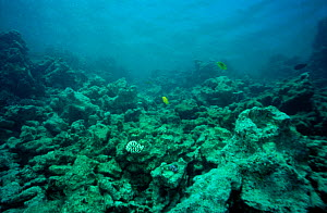 Coral reef reduced to rubble by dive boat anchors and divers Small Gifton, Egypt, Red Sea - Sue Daly